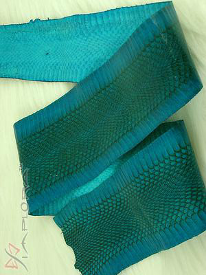 Leather Implora Turquoise  Cobra Snake Skin Hide