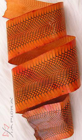 Leather Implora Orange Cobra Snakeskin