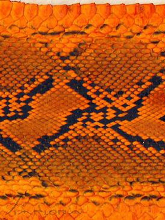 Implora Orange Python Snakeskin