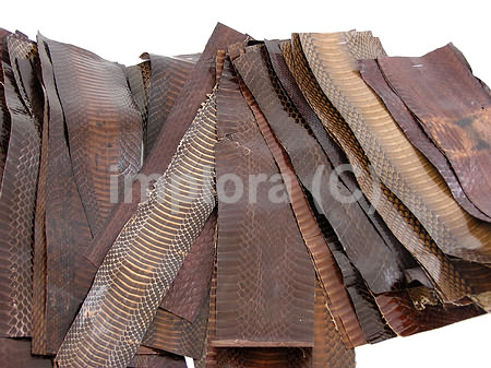 Leather Dark Brown Cobra Snake Skin Scraps