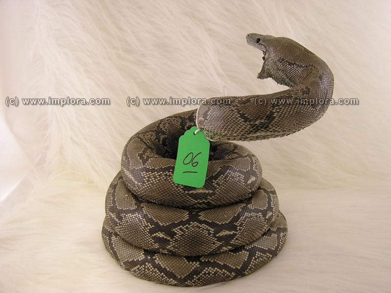 Python Skin Taxidermy Mount Stuffed 9.92 ft Large