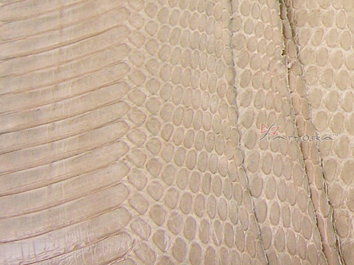 Implora Mixed Tan Cobra Snake Skin Hide Belly