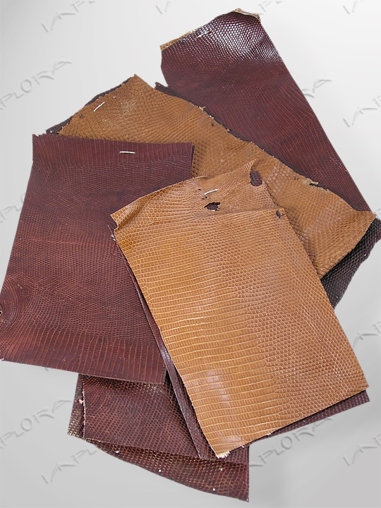 Leather Brown Monitor Lizard Skin Scraps